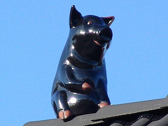 schwein und katze
